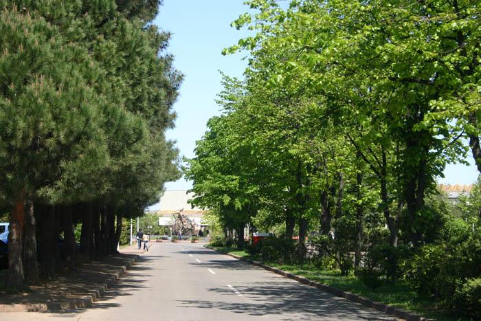 Üniversitemiz